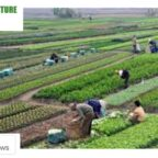 https://agriculturguide.in/apeda-is-working-towards-making-ladakh-an-organic-region-special-focus-will-be-on-branding-of-sea-buckthorn/