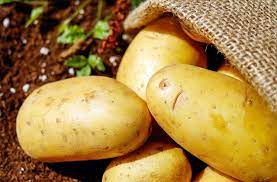 https://agriculturguide.in/diseases-of-potato-and-their-management/